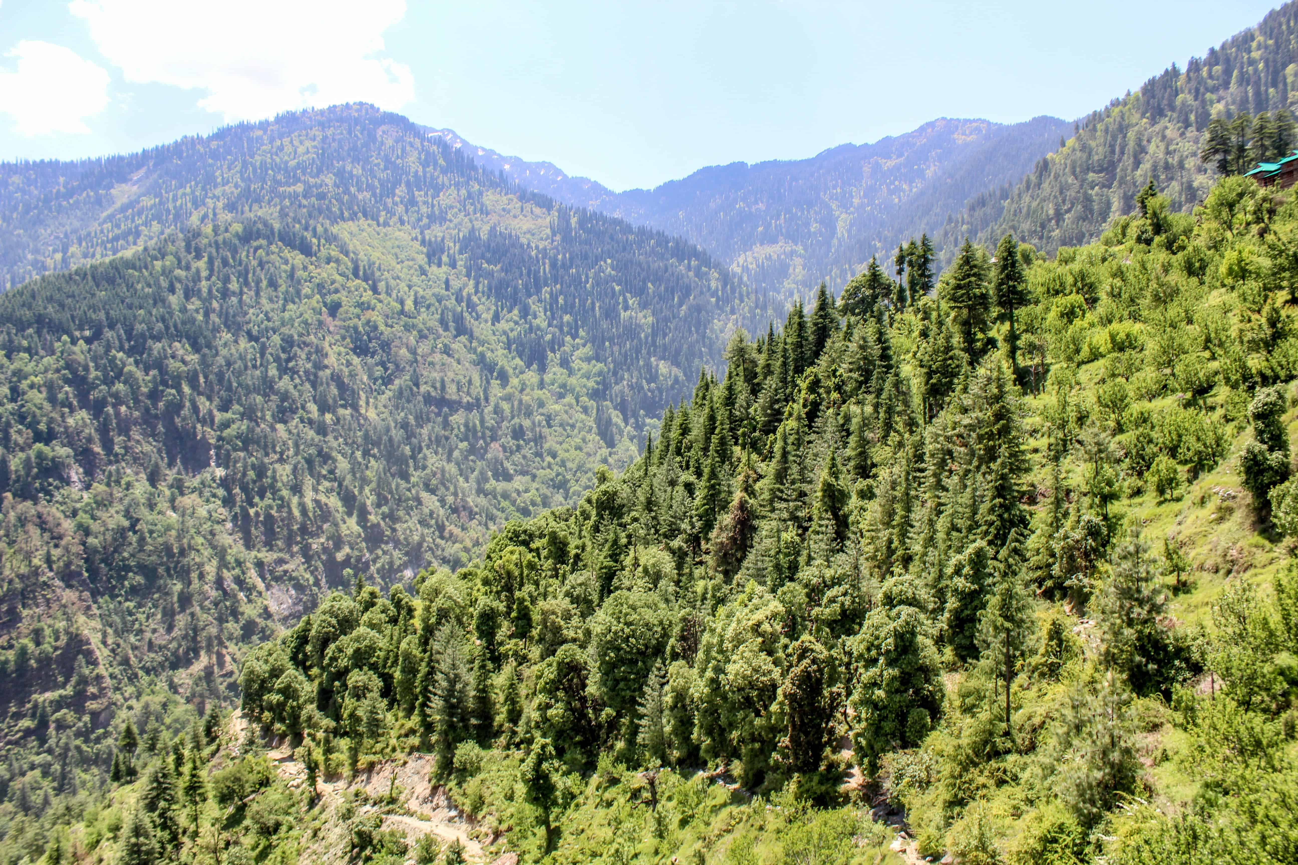 Forests in Sainj Valley