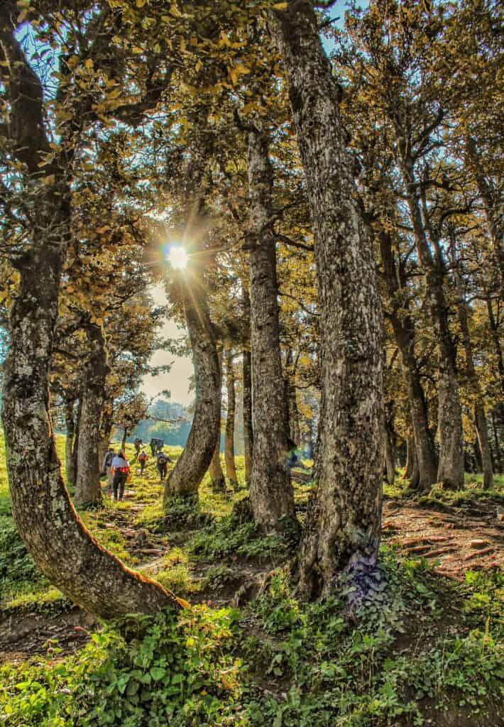 Trekkers moving from Jonker Thatch campsite towards Rola Khuli