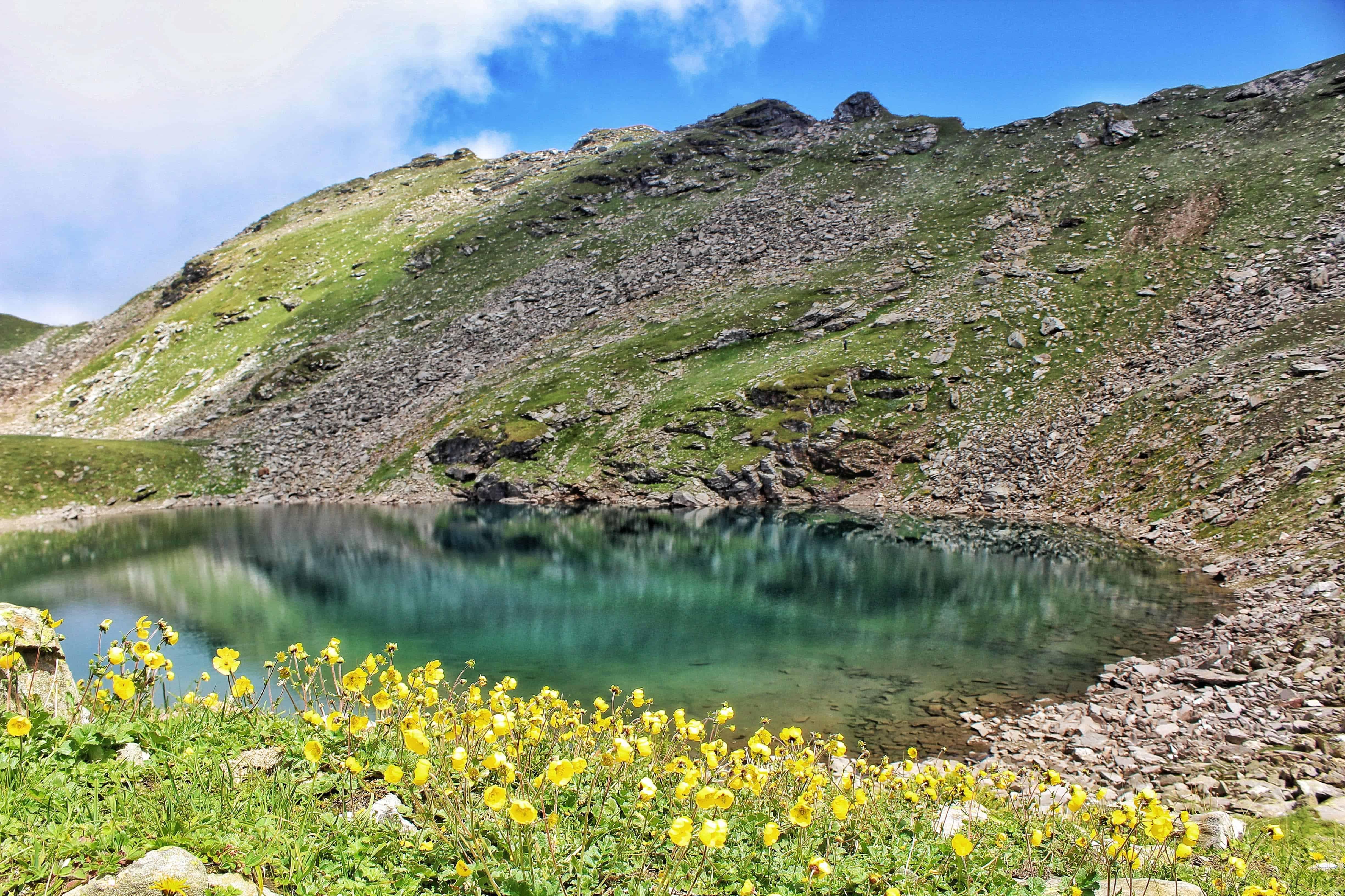 Yellow flowers along Bhrigu Lake